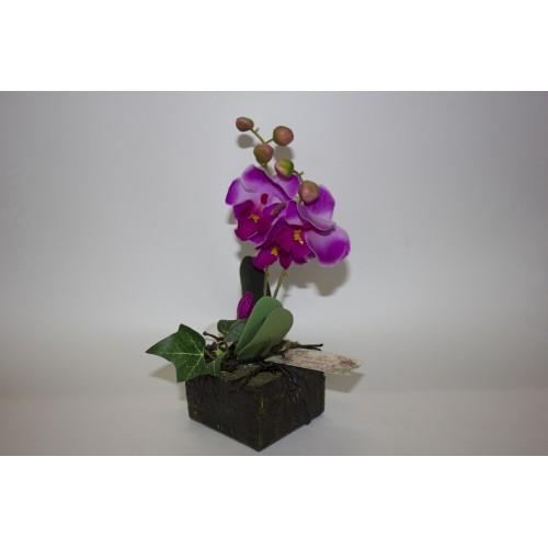 Композиция Орхидея в горшке 21см,фаленопсис